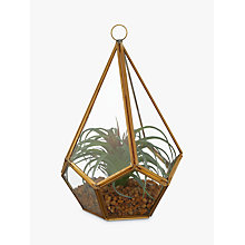 Buy John Lewis Artificial Tallansia Glass Terrarium, Green/Gold Online at johnlewis.com