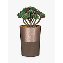 Buy John Lewis Artificial Multi Succulent, Green Online at johnlewis.com