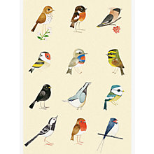Buy Woodmansterne Birds Blank Greeting Card Online at johnlewis.com