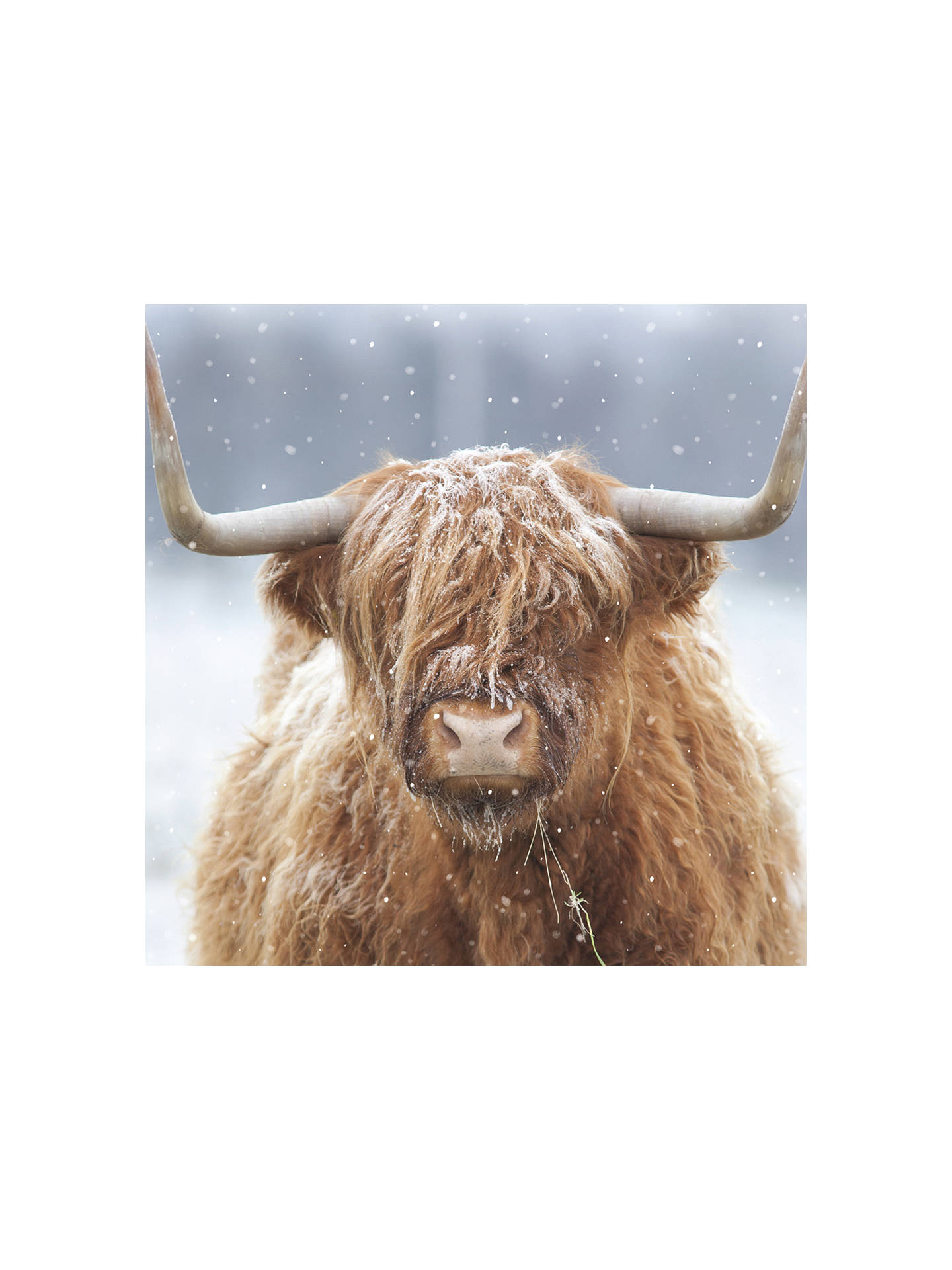 Ling Designs Highland Cow In Winter Christmas Card at John Lewis ...