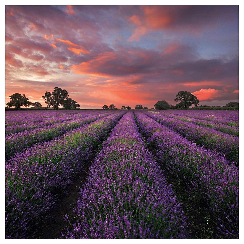 Uk Greetings Lavender Field Blank Greeting Card At John Lewis