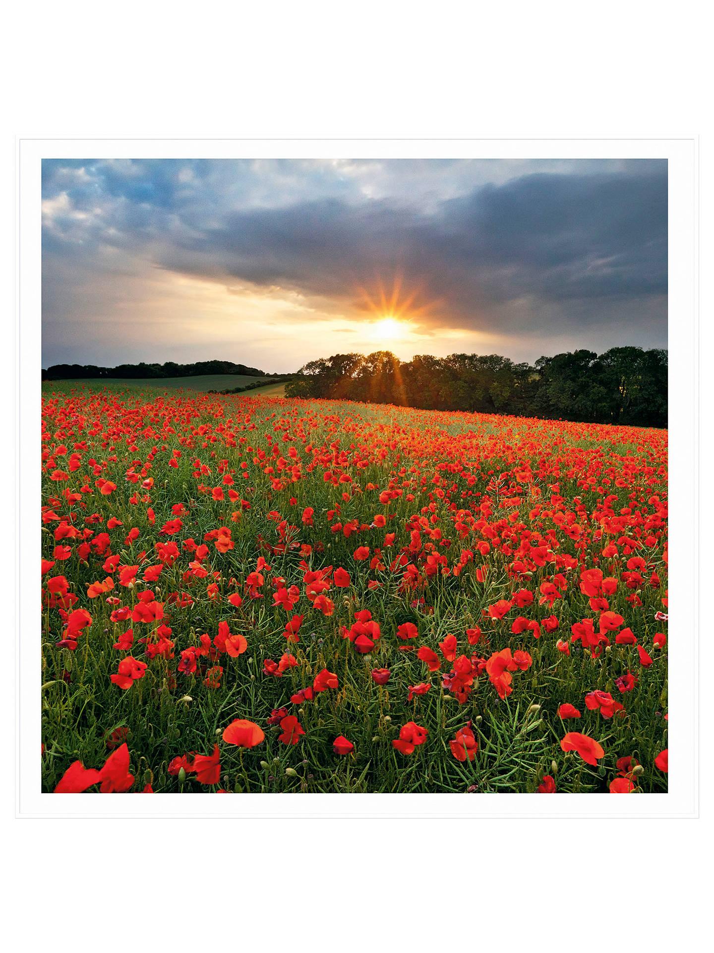 Buy UK Greetings Poppy Field Blank Greeting Card Online At Johnlewis