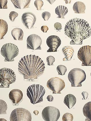 Designers Guild Captain Thomas Brown's Shells Wallpaper