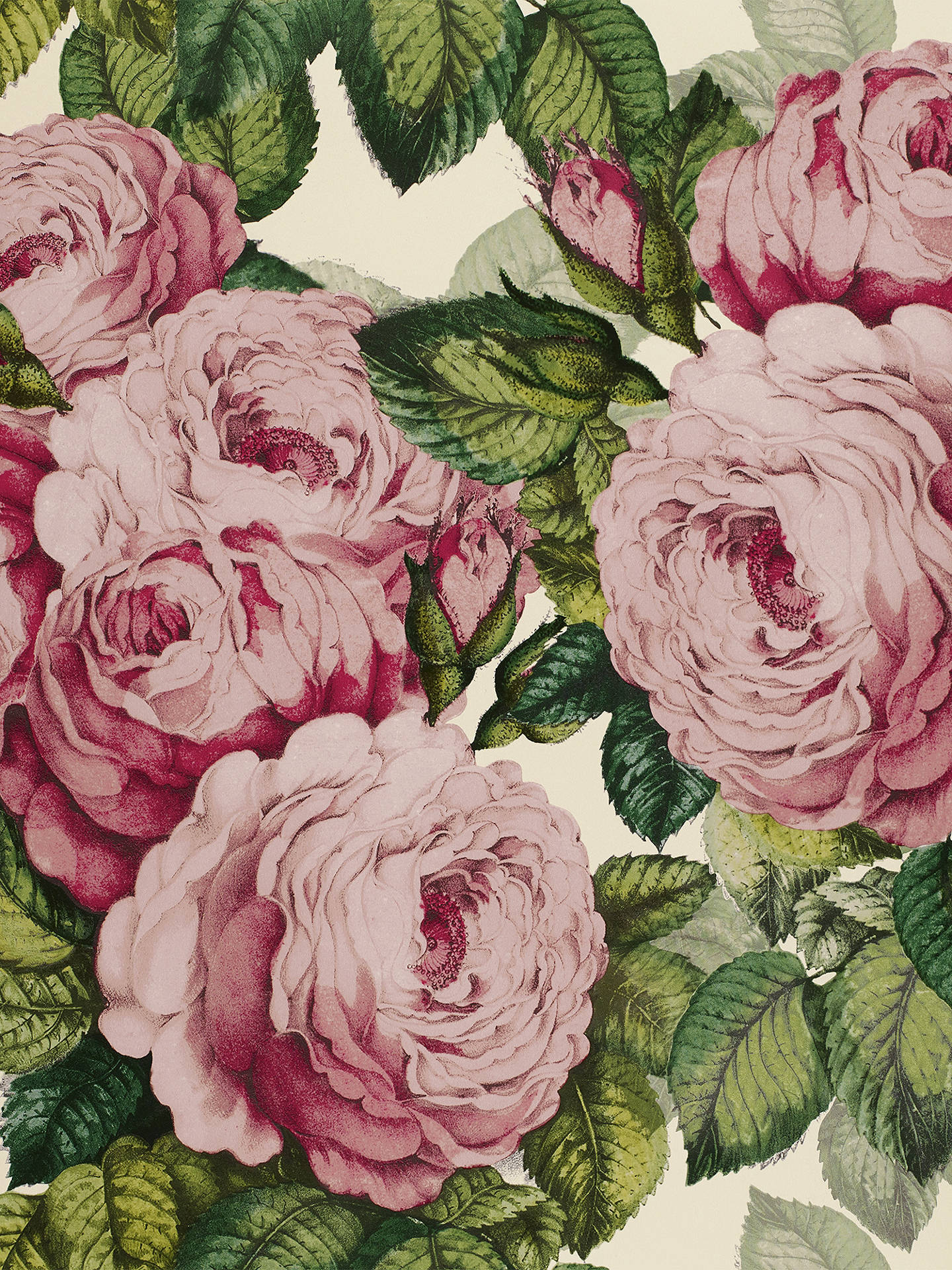 Buy Designers Guild The Rose Wallpaper, PJD6002/02 Online at johnlewis.com
