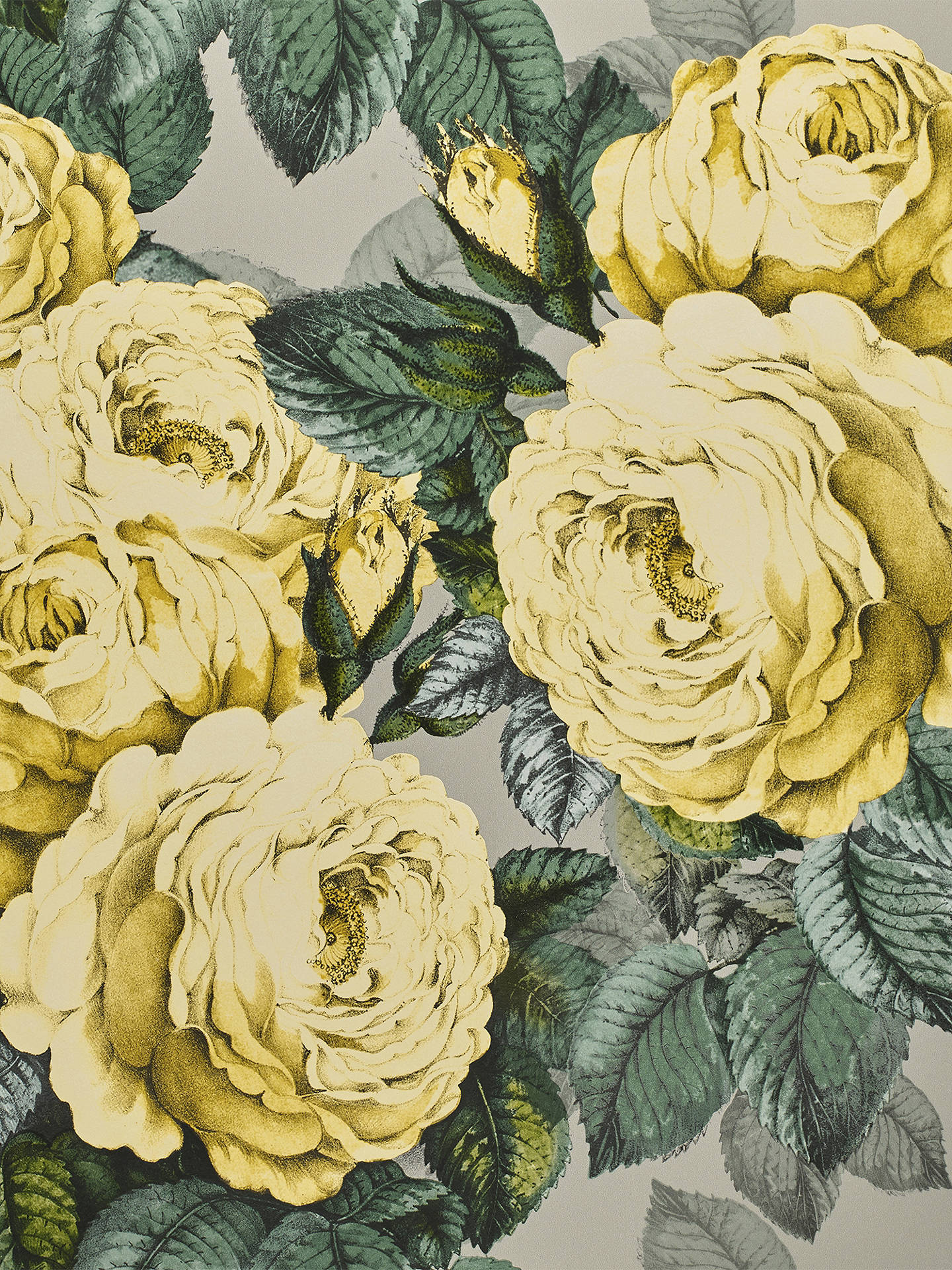 Buy Designers Guild The Rose Wallpaper, PJD6002/05 Online at johnlewis.com
