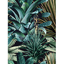 Buy MINDTHEGAP Lush Succulents Wallpaper Set, WP20164 Online at johnlewis.com