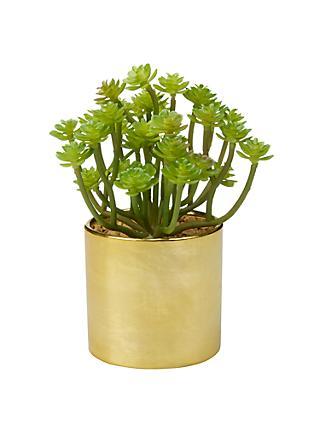 John Lewis & Partners Artificial Branched Succulent Plant in Gold Pot
