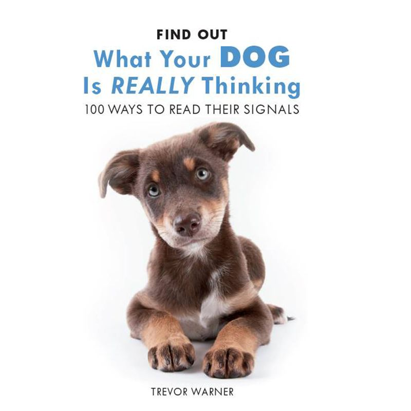 Allsorted Allsorted What Is Your Dog Thinking Book