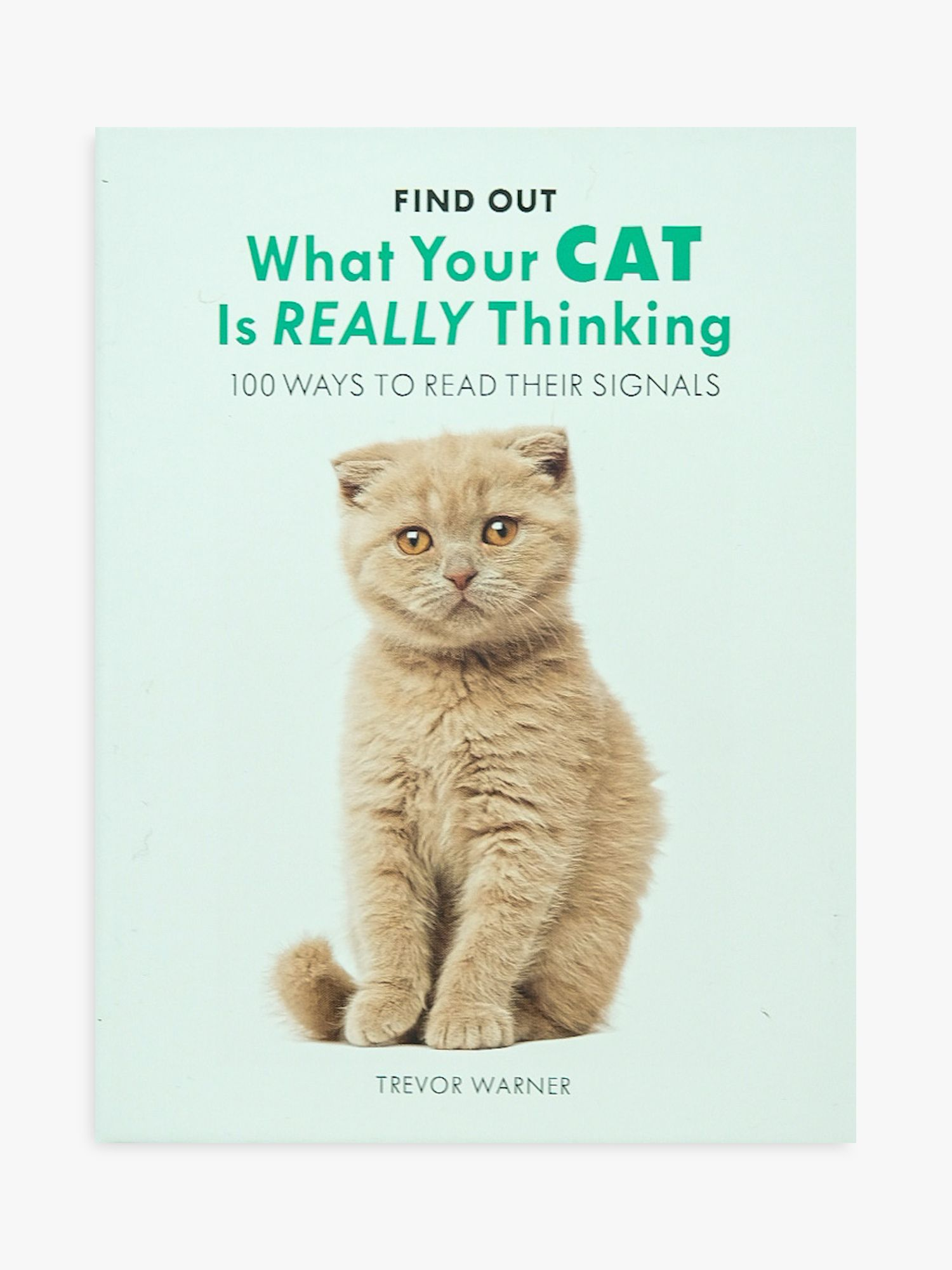 Allsorted Allsorted What Is Your Cat Thinking Book