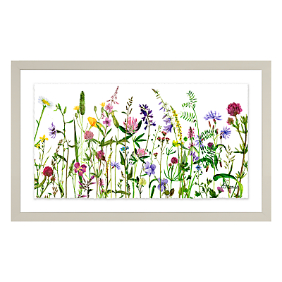 Image of Adelene Fletcher - Botanical Floral Framed Print & Mount, 26 x 42cm