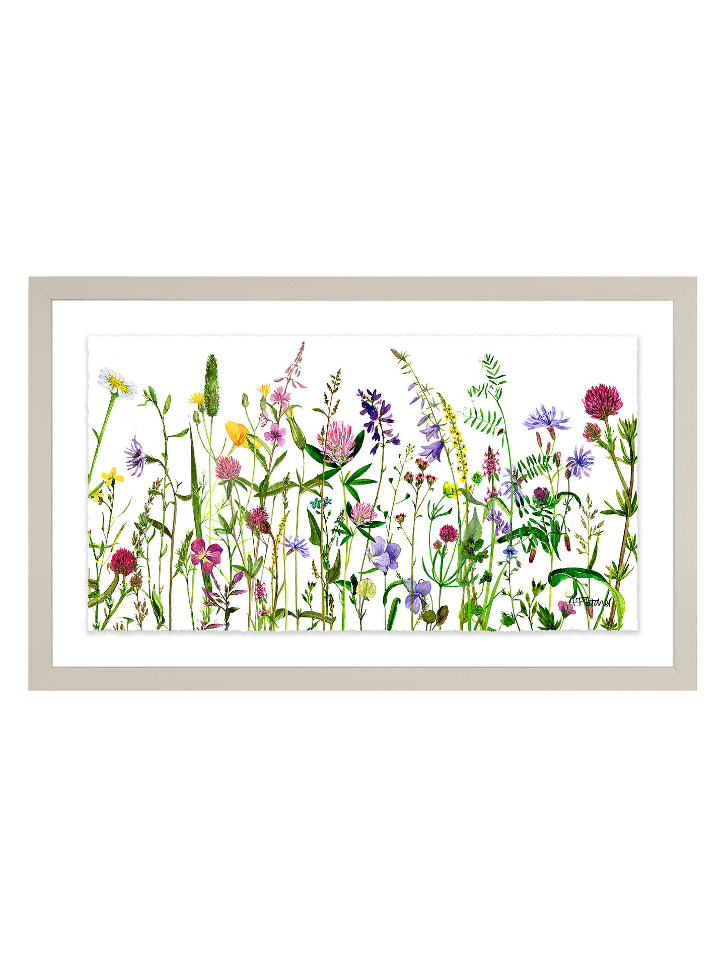 Buy Adelene Fletcher - Botanical Floral Framed Print & Mount, 26 x 42cm Online at johnlewis.com
