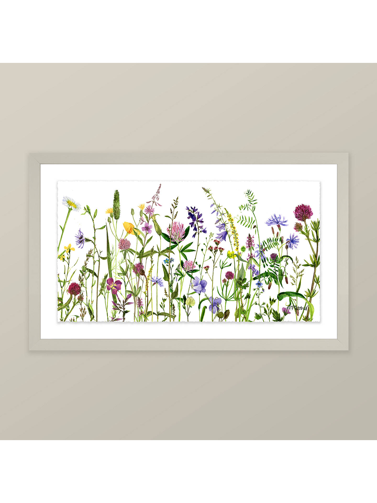 BuyAdelene Fletcher - Botanical Floral Framed Print & Mount, 26 x 42cm Online at johnlewis.com
