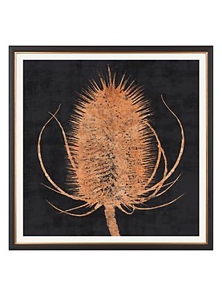 Charlotte Oakley - Copper Teasel Framed Print & Mount, 36 x 36cm, Dark Grey/Metallic