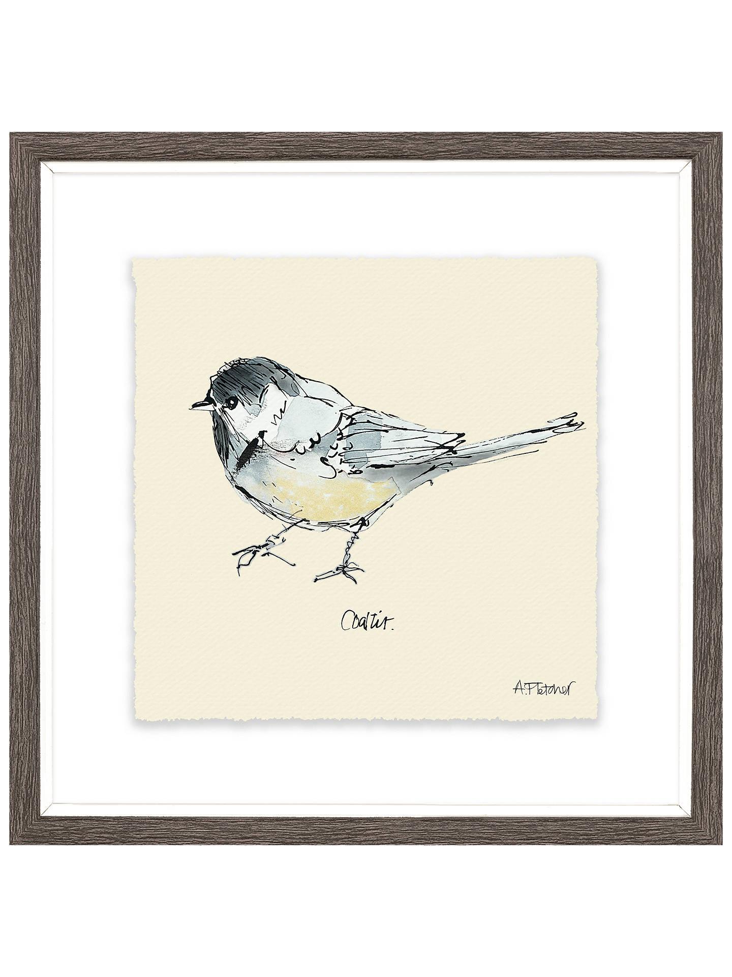 Adelene Fletcher - Coal Tit Bird Framed Print & Mount, 23.5 x 23.5cm ...