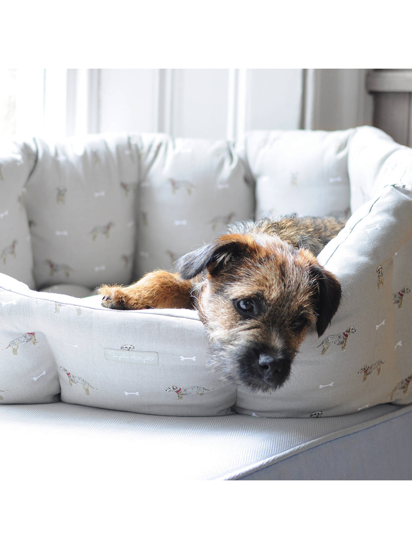 Buy Sophie Allport Terrier Dog Bed, Medium Online at johnlewis.com