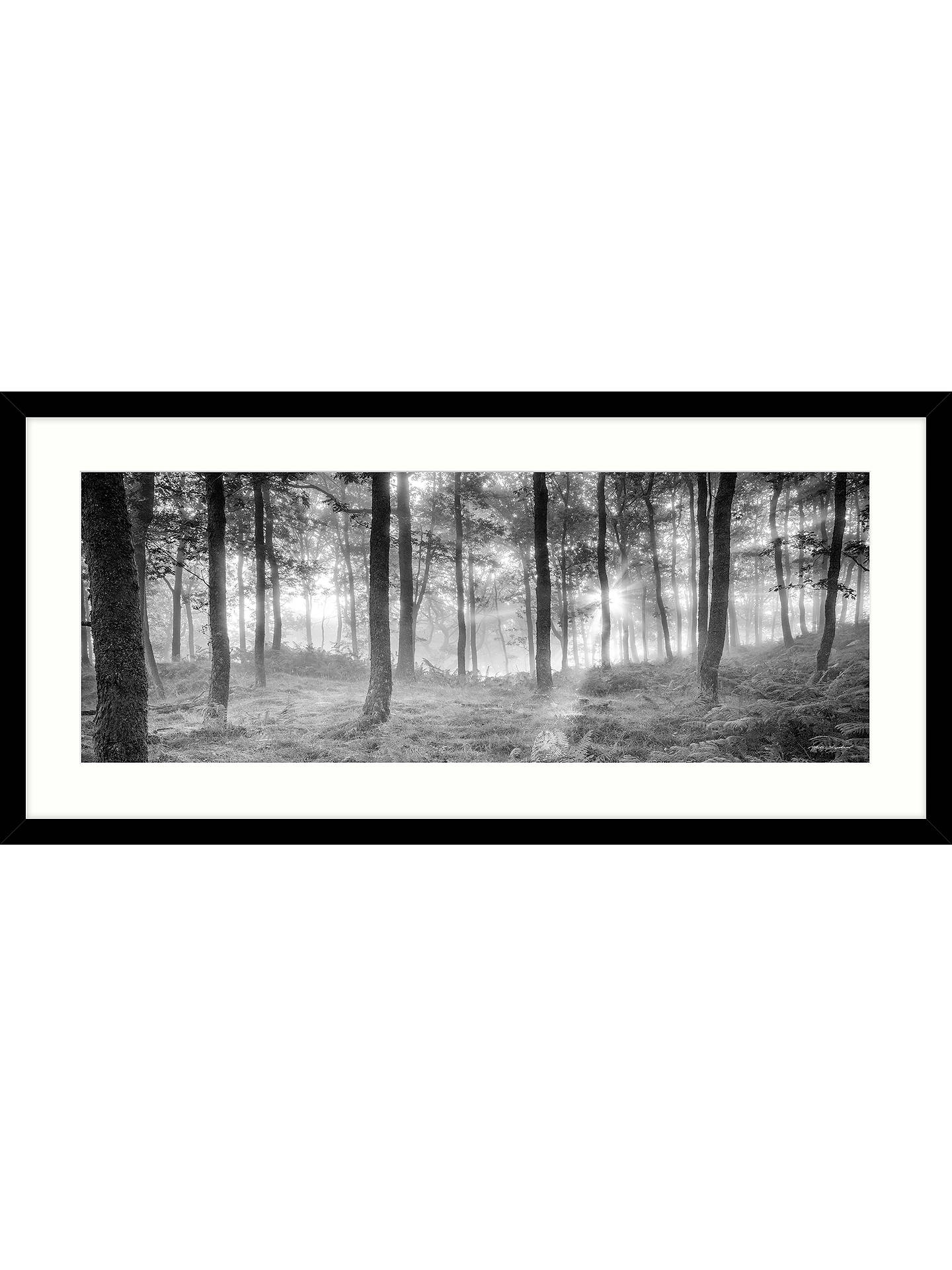 Mike Shepherd - Misty Trees Framed Print & Mount, 49x 104cm at John ...