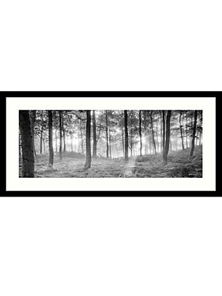 Mike Shepherd - Misty Trees Framed Print & Mount, 49x 104cm