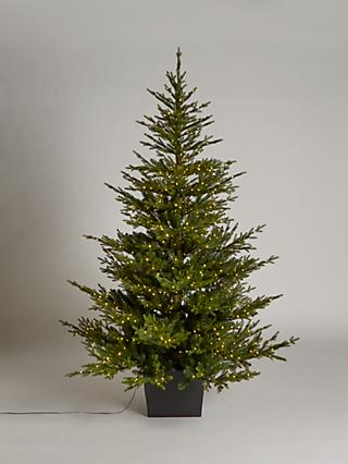 John Lewis & Partners Cotswold Potted Pre-lit Christmas Tree, 7ft
