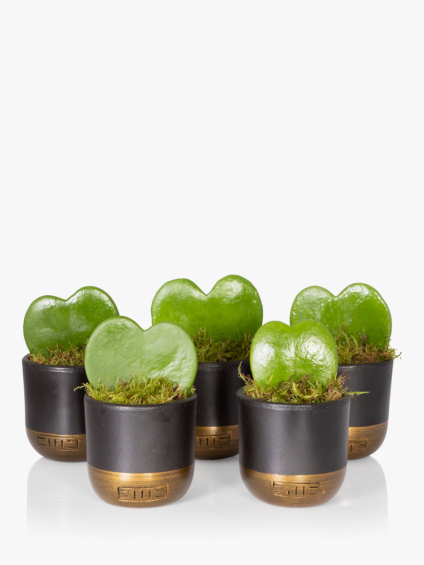 96718435 Buy The Little Botanical Bundle of Hearts Plant Online at johnlewis.com ...