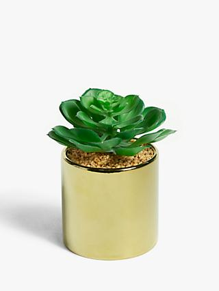 John Lewis & Partners Artificial Low Leaved Succulent