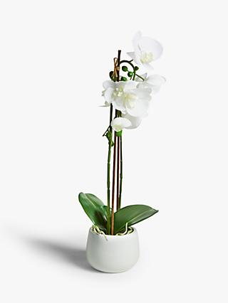 John Lewis & Partners Artificial Large White Orchid