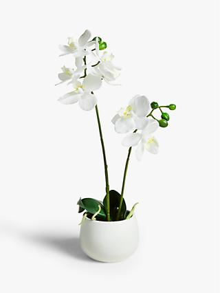 John Lewis & Partners Artificial Small White Orchid