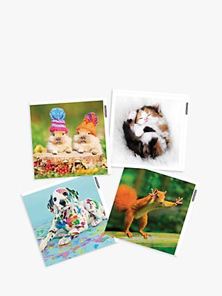 Woodmansterne Photographic Animal Blank Greeting Cards, Pack of 4
