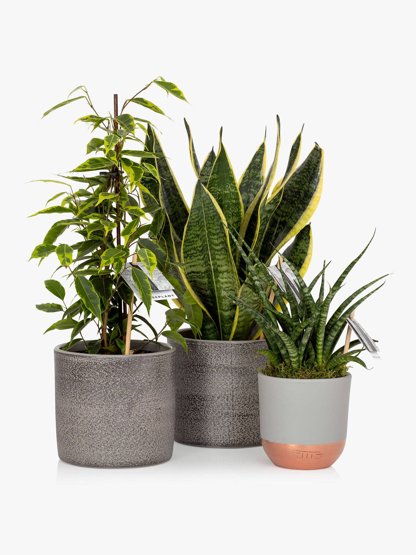 Buy The Little Botanical Purifying Plant Bundle Online at johnlewis.com
