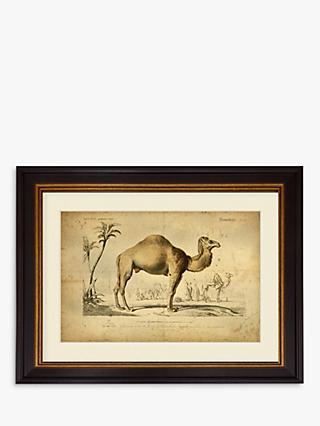 b9ee0973172 Camel - Framed Print   Mount