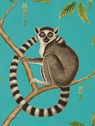 Sanderson Ringtailed Lemur Wallpaper
