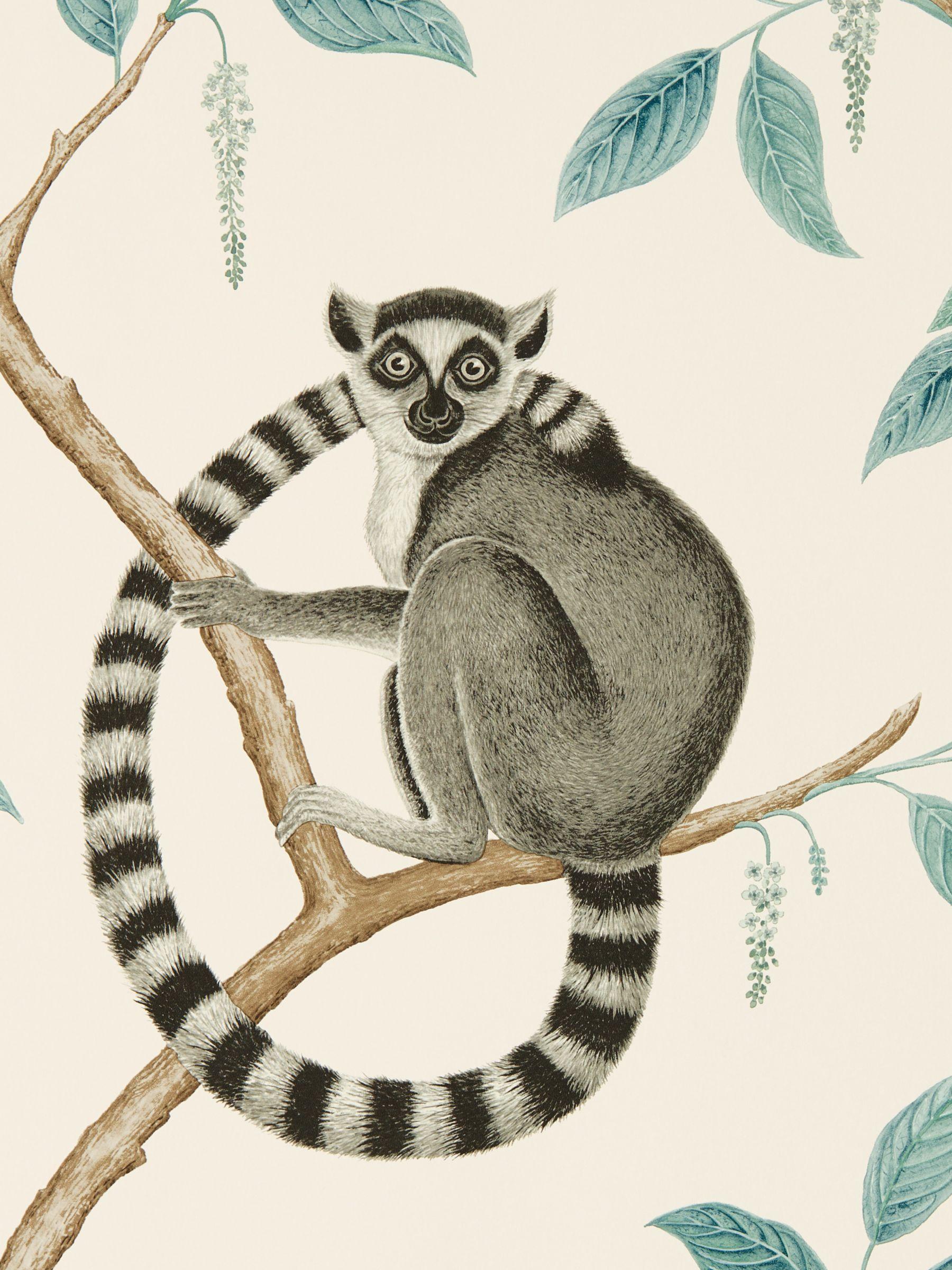Sanderson Sanderson Ringtailed Lemur Wallpaper
