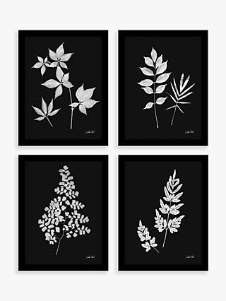Linda Wood - Floral Framed Prints, Set of 4, 43.5 x 33.5cm, Black/White