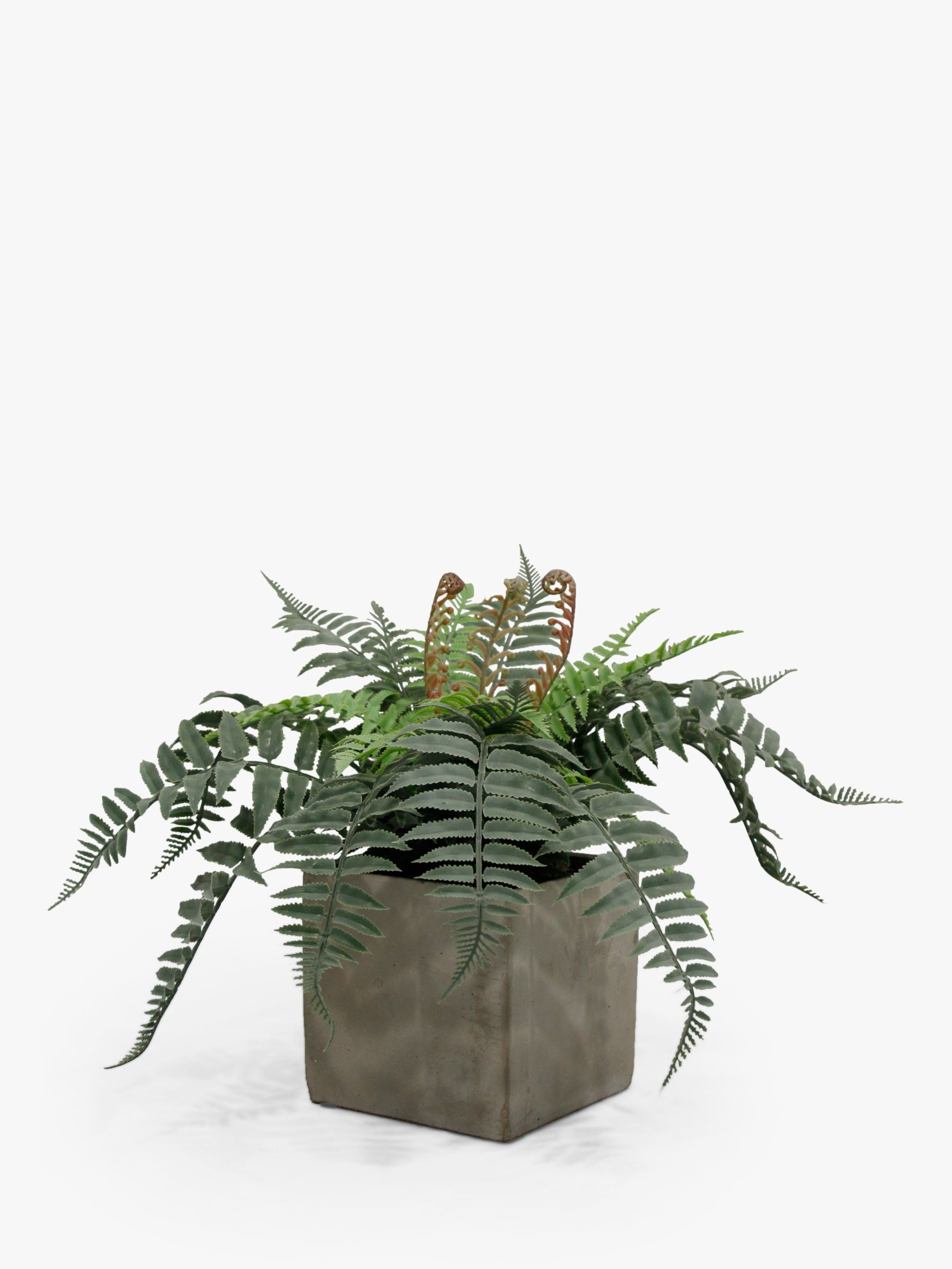 Peony Peony Artificial Wild Fern in Cement Cube