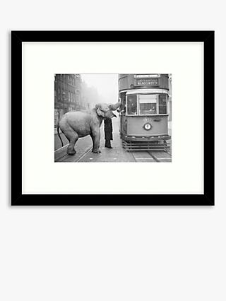 Getty Images - Hungry Elephant Wood Framed Print & Mount, 49.5 x 57.5cm