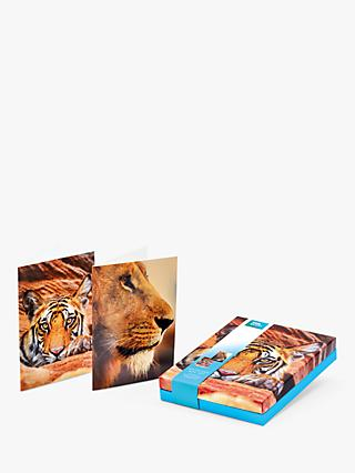 BBC Earth Big Cats Notecards, Pack of 16