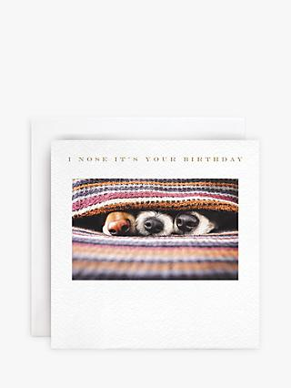 Susan O'Hanlon Dogs Noses Birthday Card