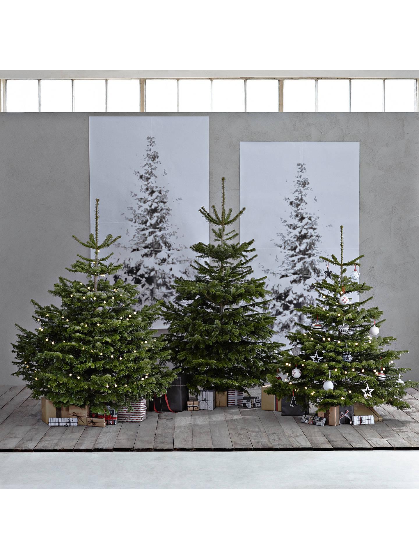 John Lewis Nordmann Fir Real Christmas Tree, 6-7ft at John Lewis ...