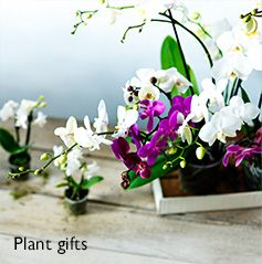 Flowers plants bouqets plant gifts john lewis give a gift that truly lasts with our gorgeous collection of potted plants bulbs and trees negle Gallery