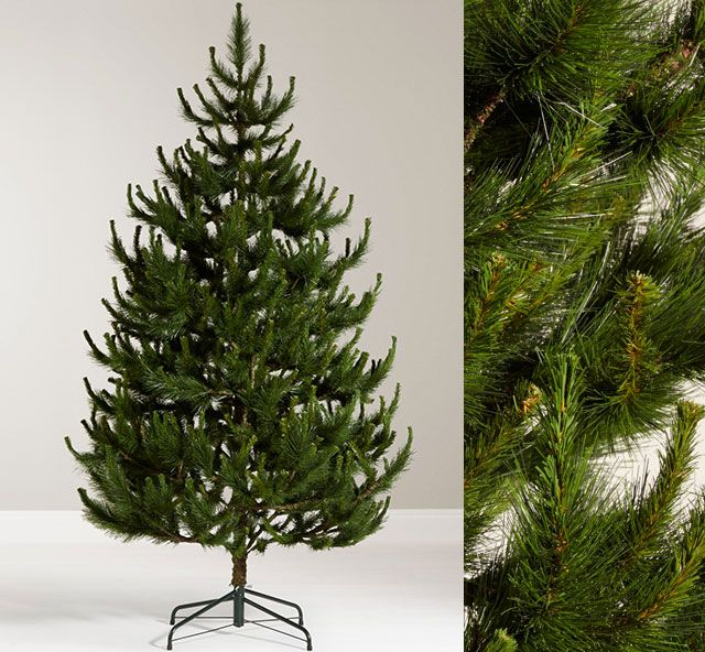 John Lewis Chamonix 7.5ft Scots Pine Christmas Tree