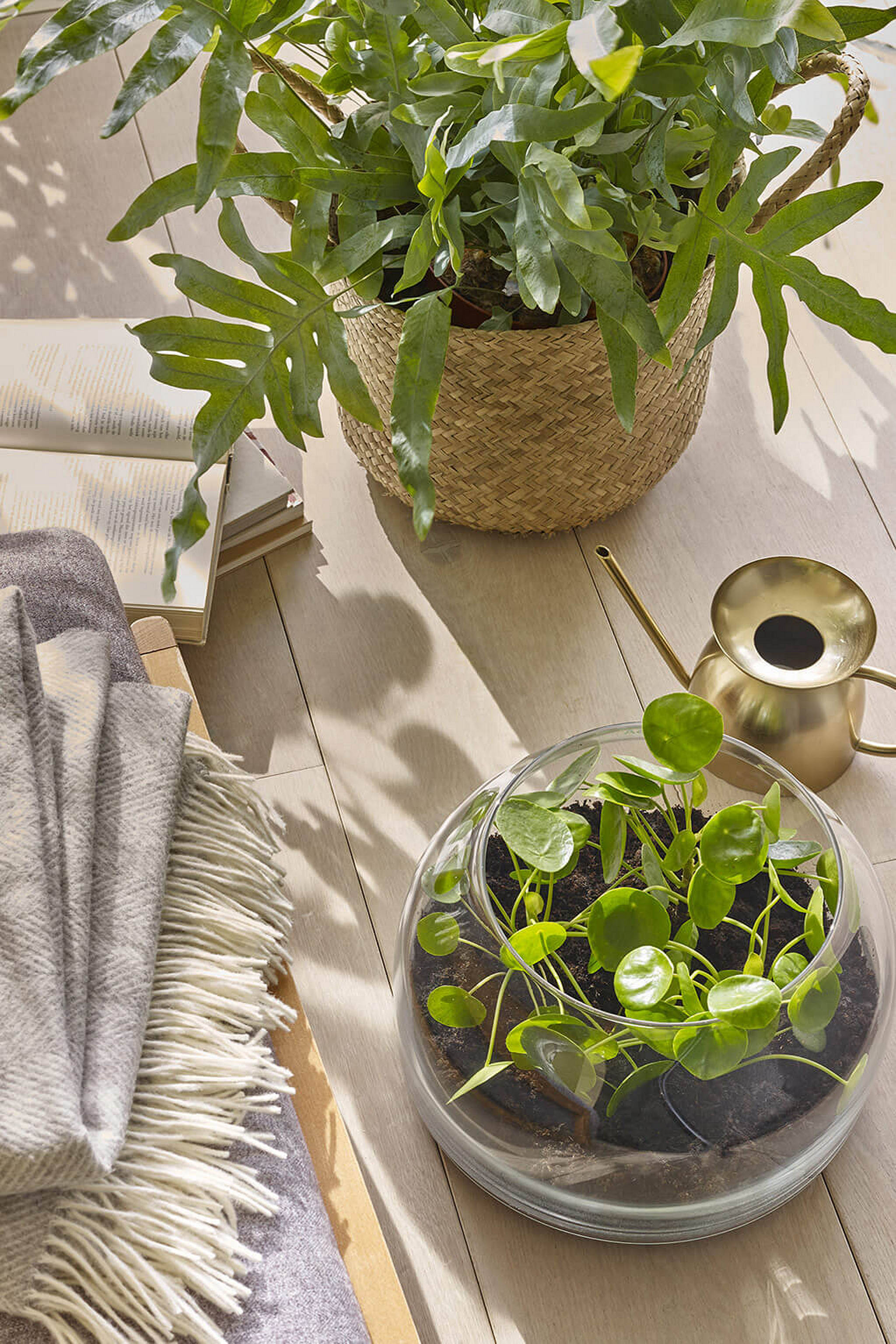 Room for Wellbeing: Plants and throw