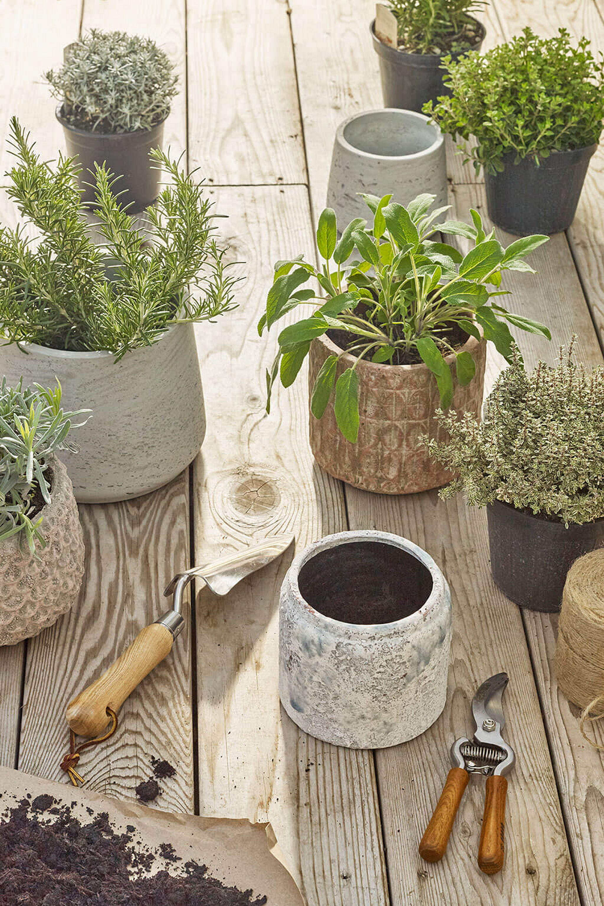 Room for Wellbeing: plants and plant pots