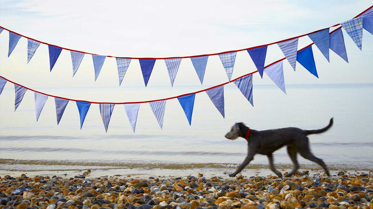 Bunting hanging over a beach - dog running in the background